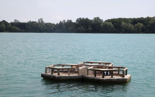 Jak skloubit těžbu stavebního materiálu a ochranu přírody? V Tovačově na to vymysleli účinnou metodu. Vzácní rybáci si užívají při hnízdění umělé ostrůvky na tamních jezerech, která vznikla při těžbě štěrkopísku z vody