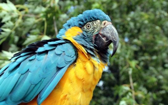 Exota Olomouc 2016 představí kolekci 250 ptačích druhů. Především ale ukáže návštěvníkům příslušníky nejvzácnějšího druhu vůbec, kterých ve volné přírodě zbývají poslední tři stovky
